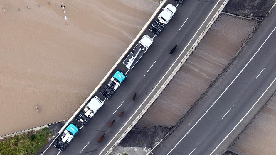 Trucks and cows stranded by floodwaters on Ipswich Road at Rocklea (after flooding)